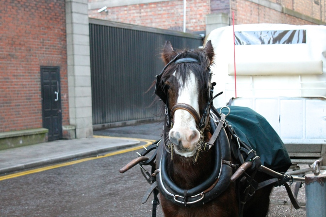 This horse greeted us as we left the factory on Saturday.