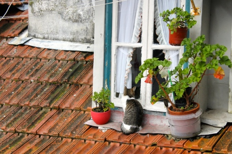 This cat looked through his home's window in Sintra, Portugal.